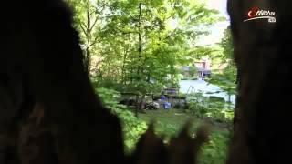 Die Waschbären sind los Reportage über Waschbären in HD Teil 1