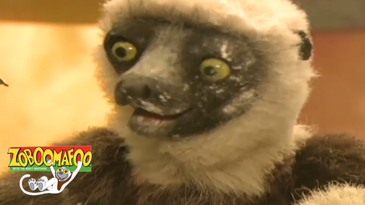 Zoboomafoo 116 - Itchy | HD | Full Episode - Video - ViLOOK
