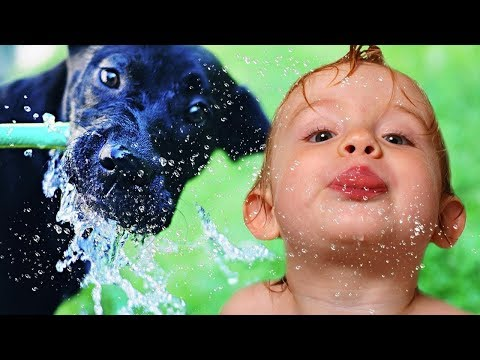 Dog loves baby | Baby And Dog Play Interesting Water Games