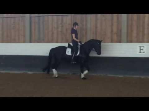 energy boost häst