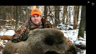 Wild Boar Hunting Shippenville Pennsylvania