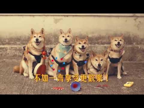 「WE5」明星柴犬做導遊 帶旅客遊走舊城中環