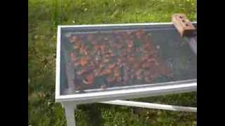 Sun Drying Apricots 1 of 5 short videos - introduction