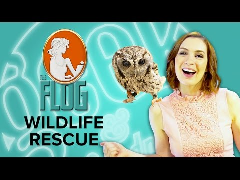 Felicia Day's The Flog! WILDLIFE RESCUE With Misha Collins