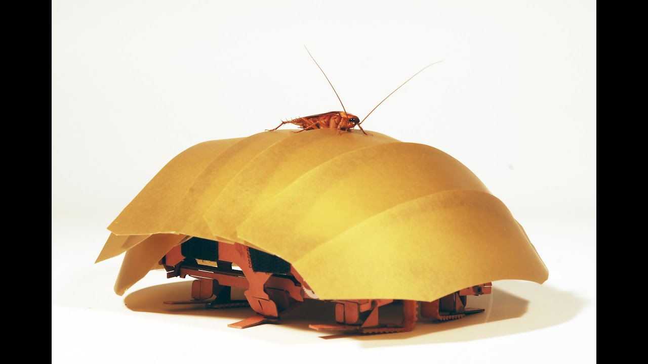 Cockroach robots to the rescue!