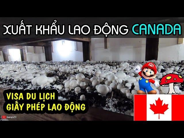 XKLD HÁI NẤM Ở CANADA - CƠ BẢN VỀ VISA LAO ĐỘNG - ĐI HÁI NẤM ĐỊNH CƯ CANADA?