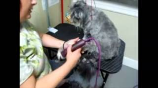 Part 1 Grooming the Matted & Fear Aggressive dog - Health Focus Part 1 of 2