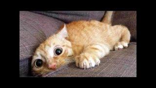 КОТЫ ПРИКОЛЫ С КОШКАМИ Смешные Коты 2020 Кошки Funny Cats