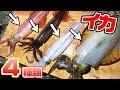 【奇跡】堤防から4種類達成‼イカでイカが釣れた!