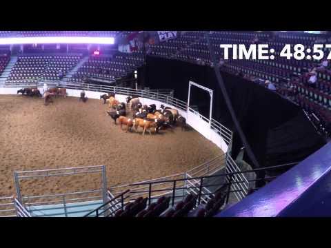 2014 Calgary Stampede Team Cattle Penning Open Finals
