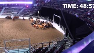 2014 Calgary Stampede Team Cattle Penning Open Finals