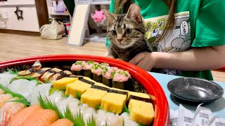 お寿司の出前が届いたときの猫の反応がこちらですw