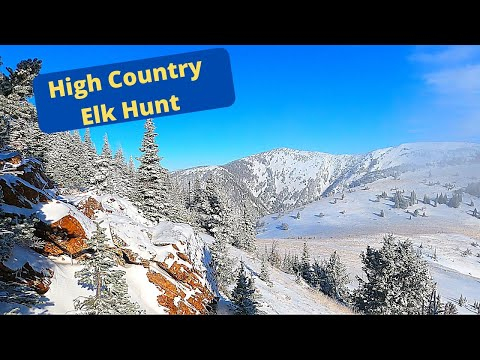 Solo High Country Elk 2020