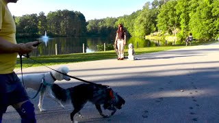 Dog Training, Gus And Dex: Frisbee, Atlanta Park, Manners Training