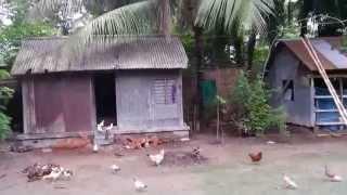 My Home Village ( Bangladesh)
