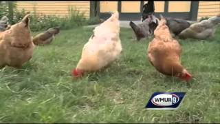 Weather Wednesday: NH Farm Museum