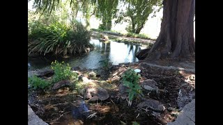 Serra Springs (California)