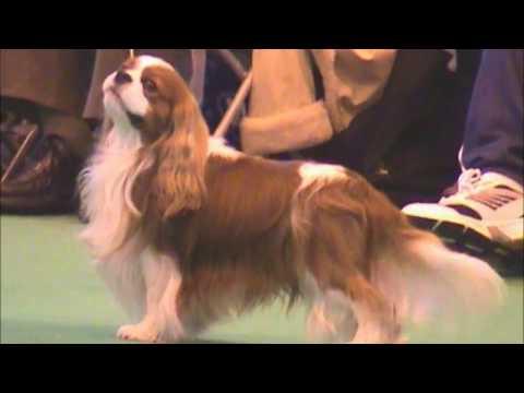 Crufts 2007 Open Dog