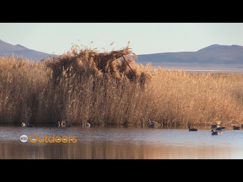 West Desert Waterfowl Hunting At Fish Springs, Utah