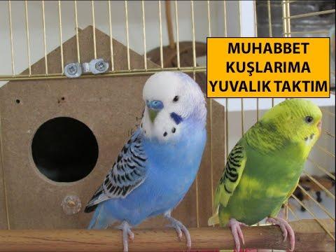 Muhabbet Kuşlarıma Yuvalık Taktım