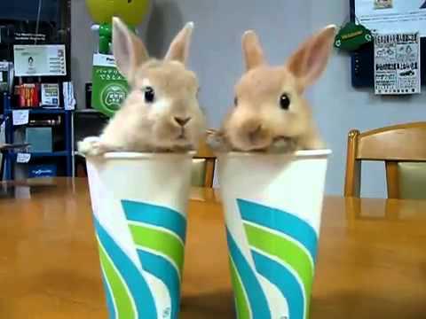 Los Conejos mas Bonitos del Mundo  YouTube