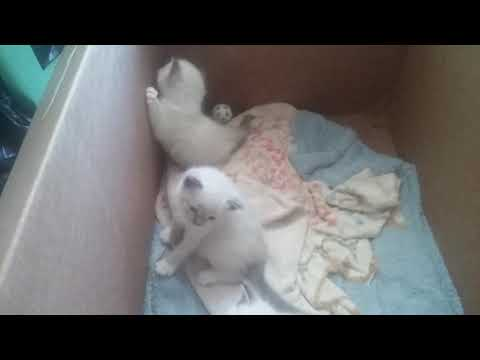Rena's kittens