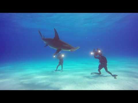 Shark Diving Tiger Beach Bahamas