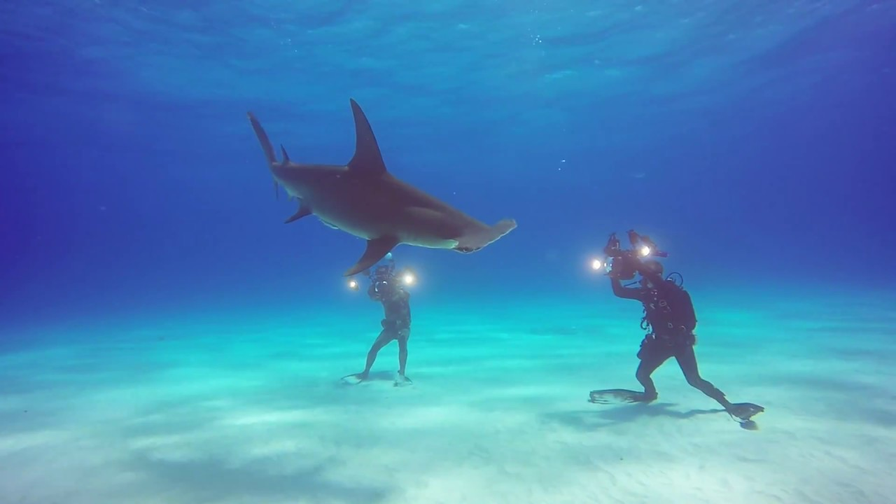 Shark Diving Tiger Beach Bahamas
