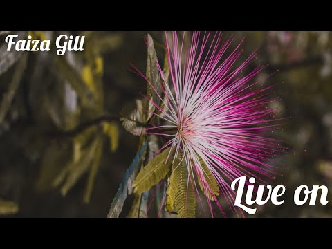 my-tenth-live-streaming