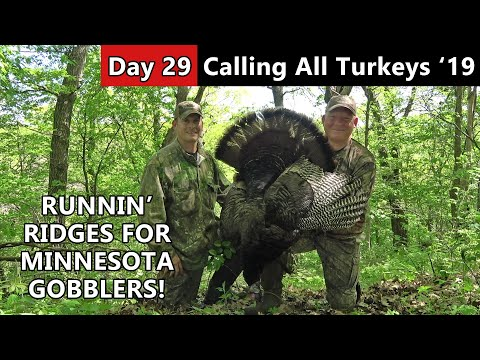Almost Busted! - Public Land Gobbler Hunt - Calling All Turkeys