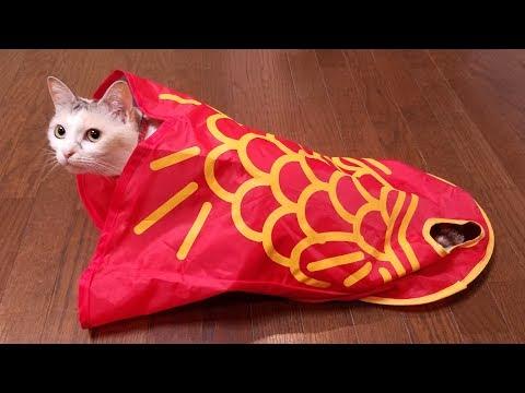 金魚のトンネルで遊ぶ猫【ネコ吉LIFE part13】Cute Cat Videos part13