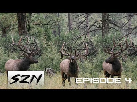 GIANT BULL ELK FIGHT!! Bugle At 25 Yds | HUNTING PUBLIC LAND DIY