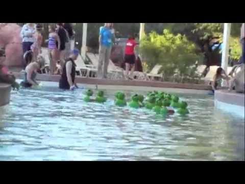 Annual Turtle Race 2011 for Tempe, AZ Private Christian School - Bethany Christian School