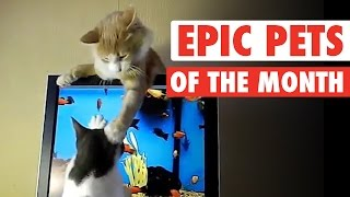Best Pets of the Month || Jan 2016