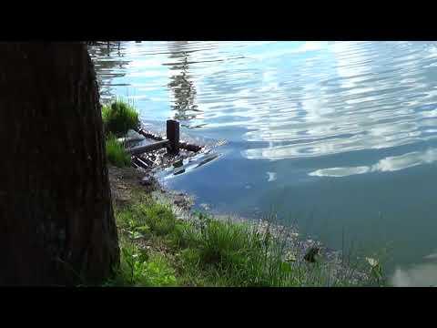 Дятьково Больничное озеро