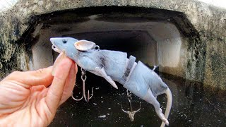 SEWER FISHING with a HUGE RAT LURE!!