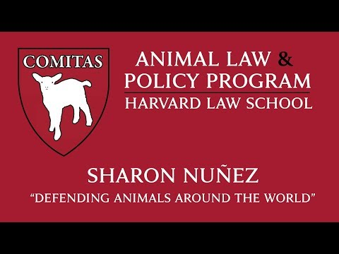"Animal Law Week at HLS | Sharon Nuñez, ""Defending Animals Around the World"""