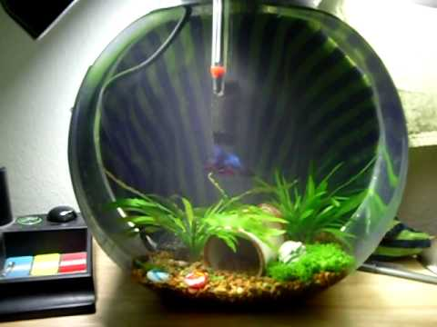 Update 2 5 gallon planted betta bowl youtube for 2 gallon fish bowl