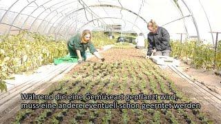 BBW Winnenden Gemüsebau
