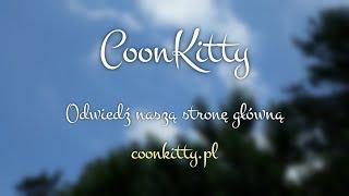"""Hodowla kotów rasowych Maine Coon """"CoonKitty"""""""