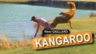 Repeat youtube video KANGAROO (REMI GAILLARD)