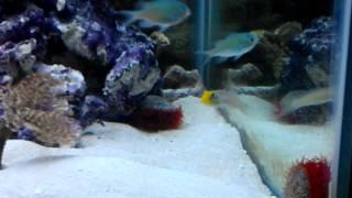 my 75g saltwater reef tank