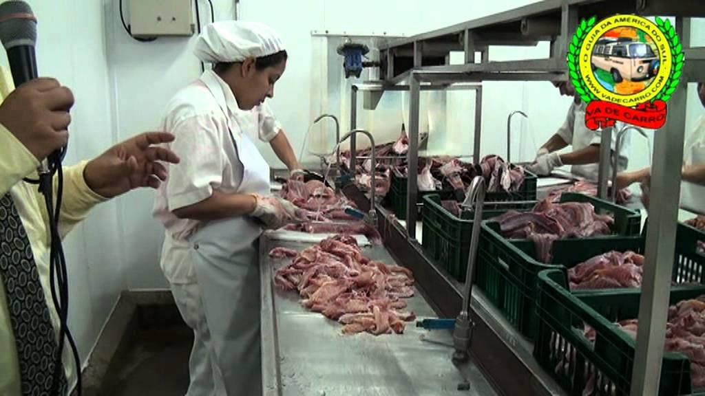 Menno pez alevines criadero de tilapia y otros peces for Criaderos de pescados colombia