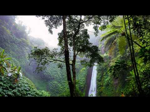 2 Hours - Relaxing Nature Sounds - Rainforest Frogs and Insects