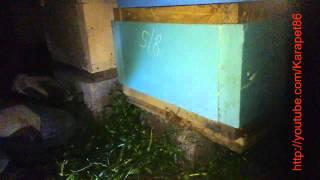 видео Асковет (жидкость - 1мл), ЗАО