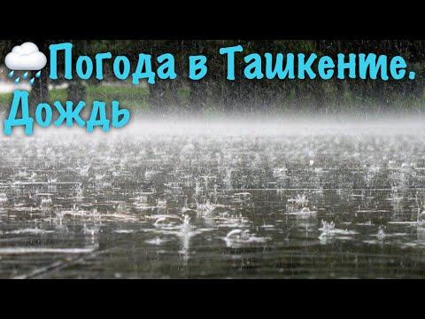 Погода в Ташкенте. Дождь | Weather in Tashkent. Rain