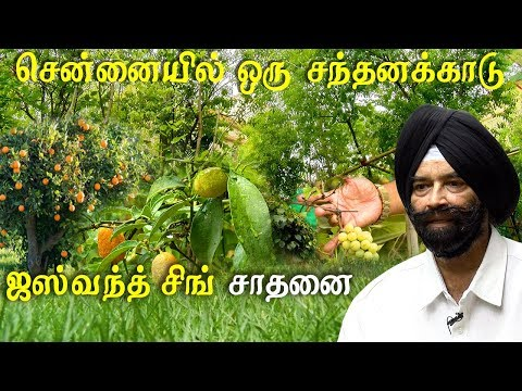 agriculture and organic farming evergreen fruit forest at chennai model farm in tamil