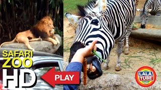 Taman Safari Indonesia part 1 - Safari ZOO ( with Complete animal sound )