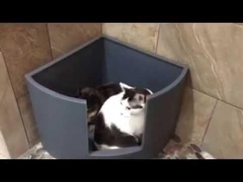 kitangle corner kitty demo video