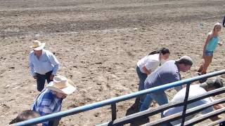 Roy Rodeo Wild Cow Milking 6/7/15